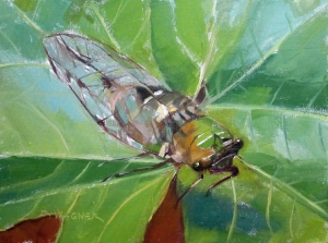 Cicada_Study